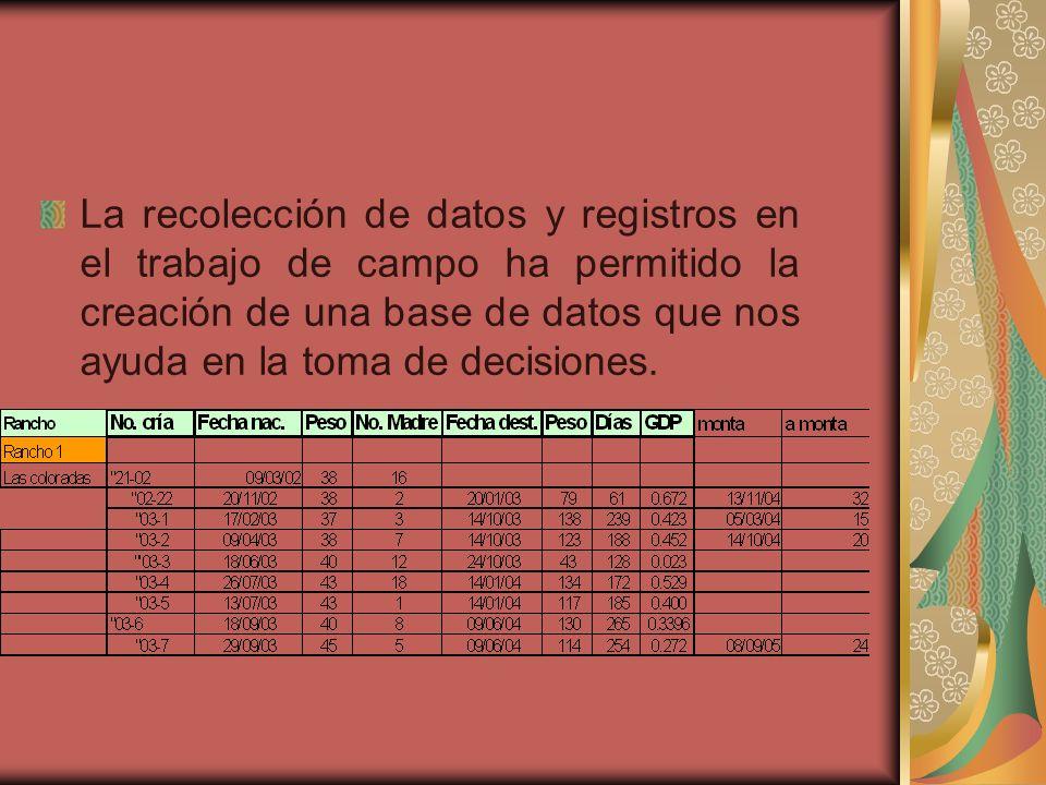 La recolección de datos y registros en el trabajo de campo ha permitido la creación de una base de datos que nos ayuda en la toma de decisiones.