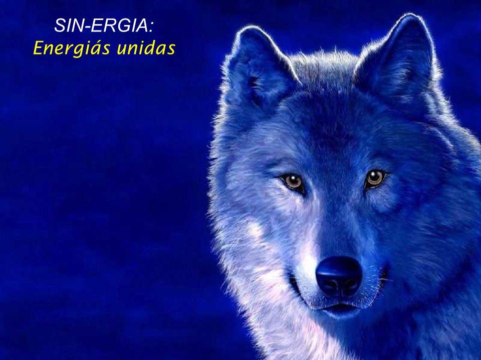 SIN-ERGIA: Energiás unidas