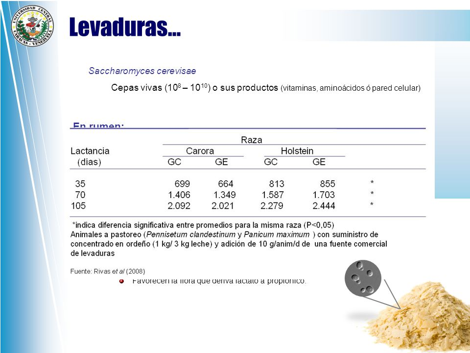 Levaduras… En rumen: En microflora: Saccharomyces cerevisae