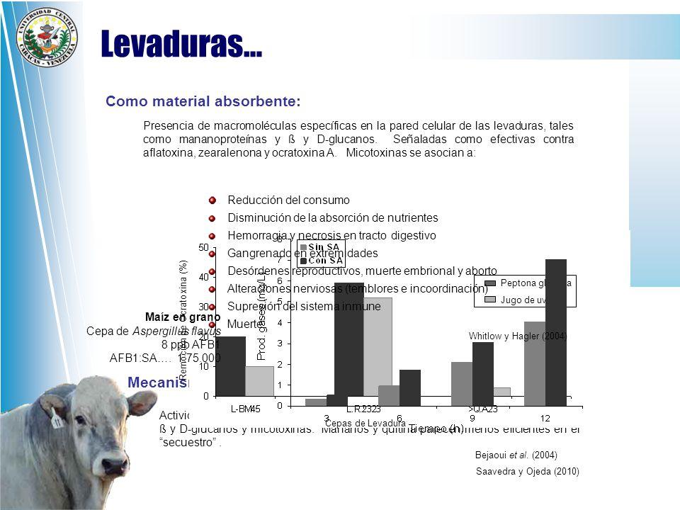 Levaduras… Como material absorbente: Mecanismo: Reducción del consumo