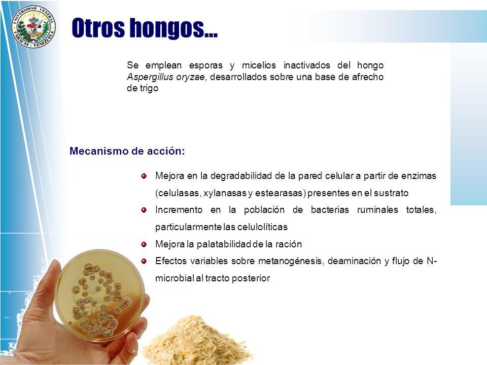 Otros hongos… Mecanismo de acción: