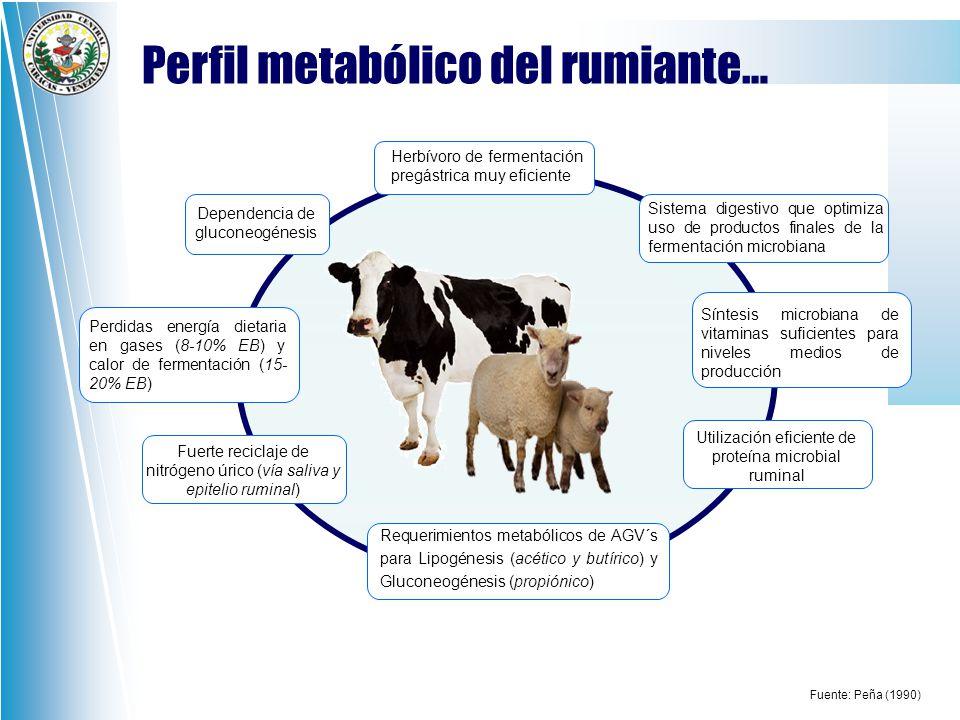 Perfil metabólico del rumiante…