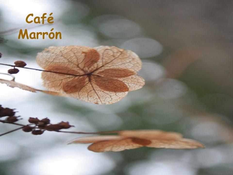 Café Marrón