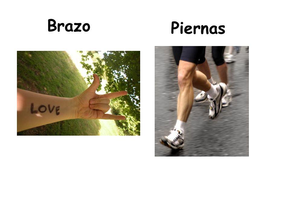 Brazo Piernas
