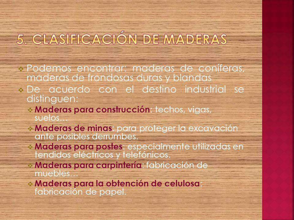 5. Clasificación de maderas