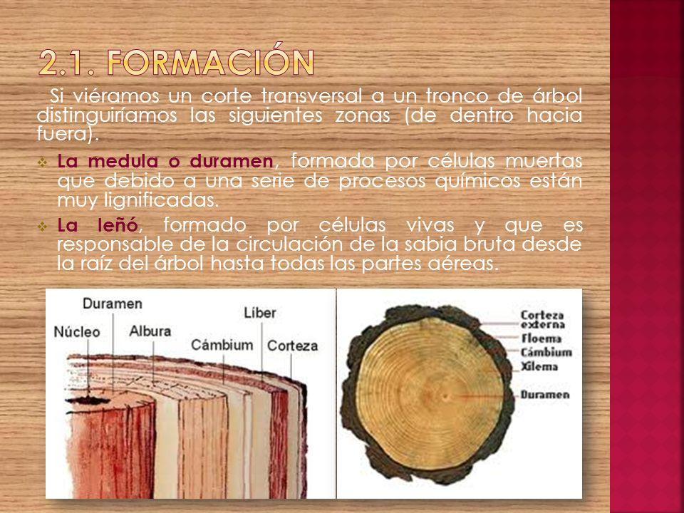 2.1. FormaciónSi viéramos un corte transversal a un tronco de árbol distinguiríamos las siguientes zonas (de dentro hacia fuera).