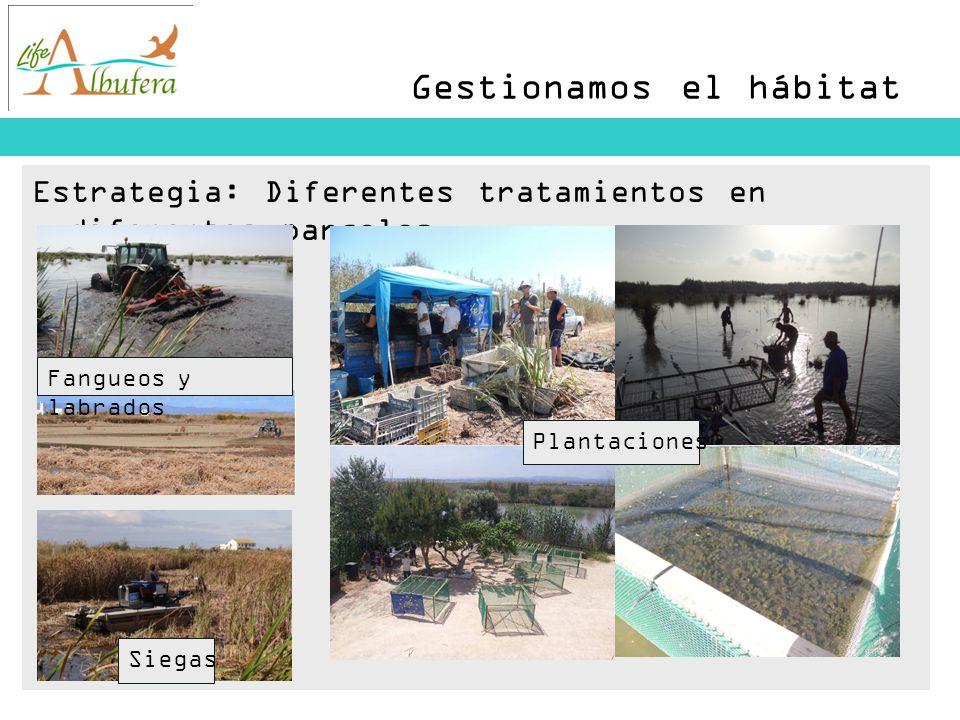 Gestionamos el hábitat