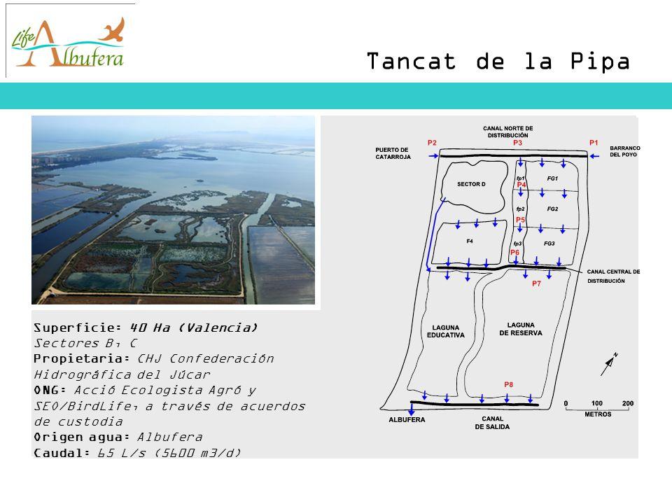 Tancat de la Pipa Superficie: 40 Ha (Valencia) Sectores B, C