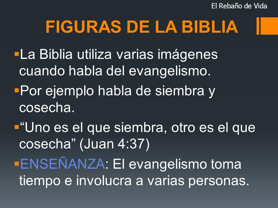 El Rebaño de Vida FIGURAS DE LA BIBLIA. La Biblia utiliza varias imágenes cuando habla del evangelismo.