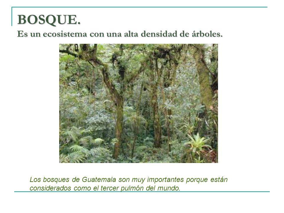 BOSQUE. Es un ecosistema con una alta densidad de árboles.