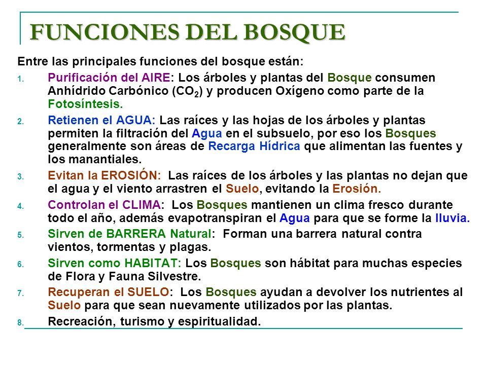 FUNCIONES DEL BOSQUE Entre las principales funciones del bosque están: