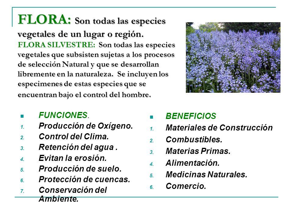 FLORA: Son todas las especies vegetales de un lugar o región
