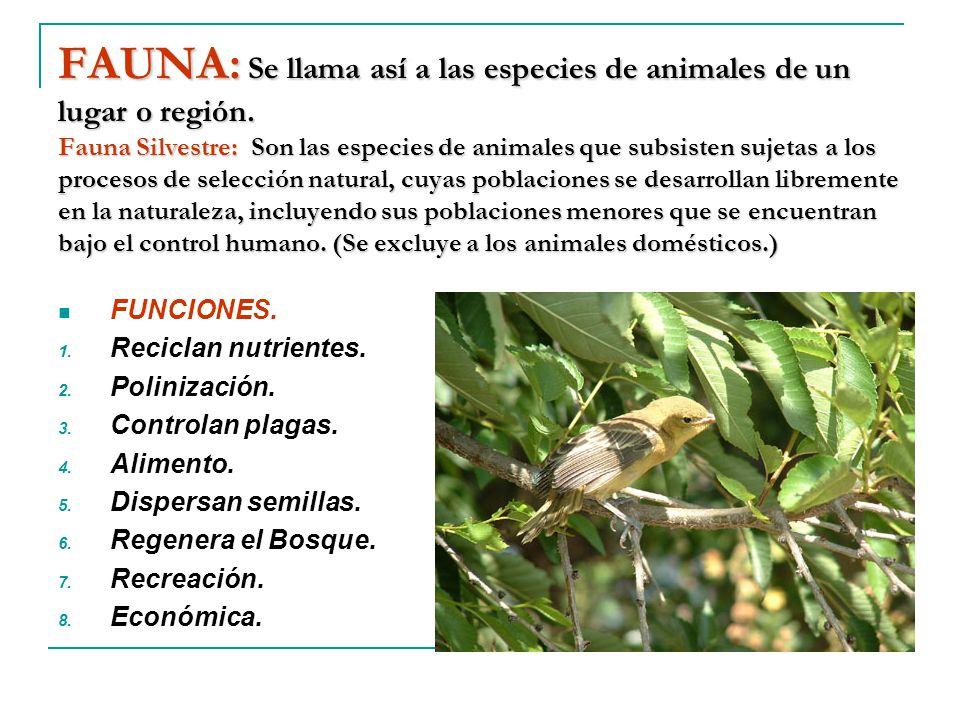 FAUNA: Se llama así a las especies de animales de un lugar o región