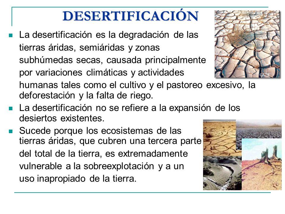 DESERTIFICACIÓN La desertificación es la degradación de las