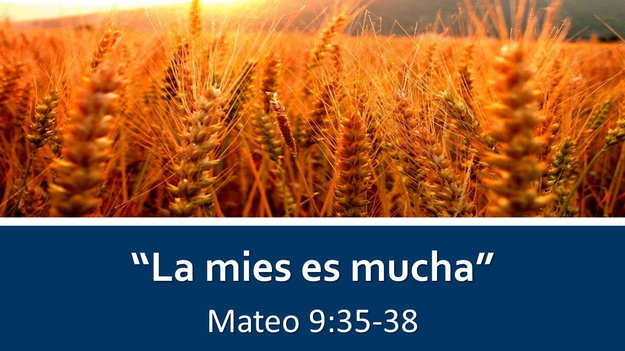 La mies es mucha Mateo 9:35-38