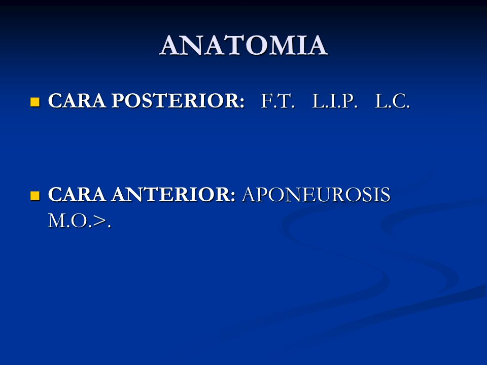 ANATOMIA CARA POSTERIOR: F.T. L.I.P. L.C.