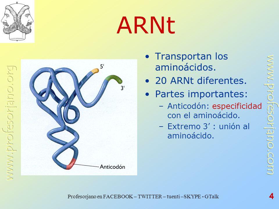 ARNt Transportan los aminoácidos. 20 ARNt diferentes.