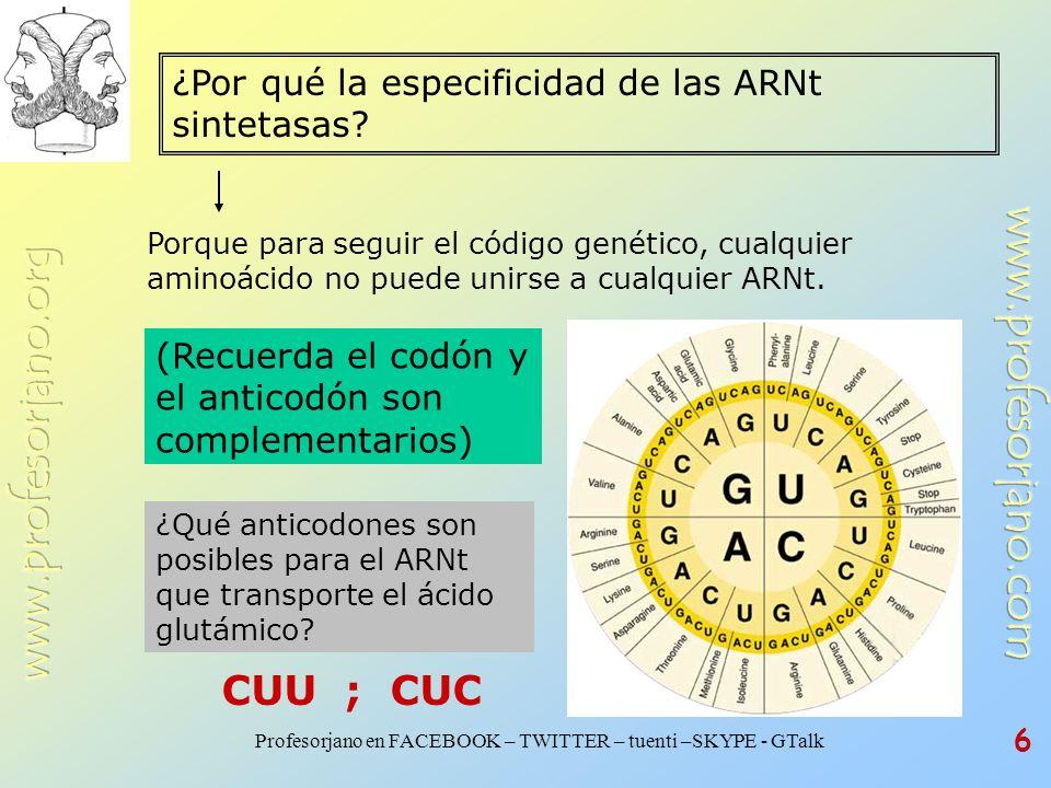 CUU ; CUC ¿Por qué la especificidad de las ARNt sintetasas