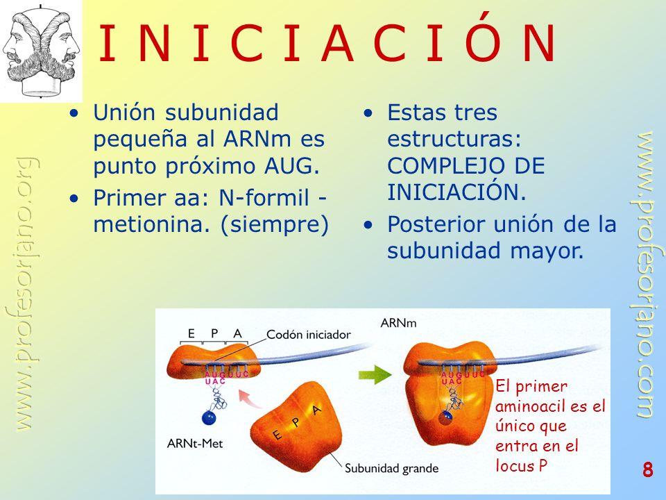 I N I C I A C I Ó N Unión subunidad pequeña al ARNm es punto próximo AUG. Primer aa: N-formil - metionina. (siempre)