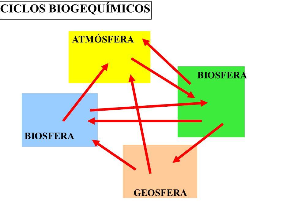 CICLOS BIOGEQUÍMICOS ATMÓSFERA BIOSFERA BIOSFERA GEOSFERA