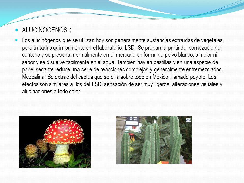 ALUCINOGENOS :