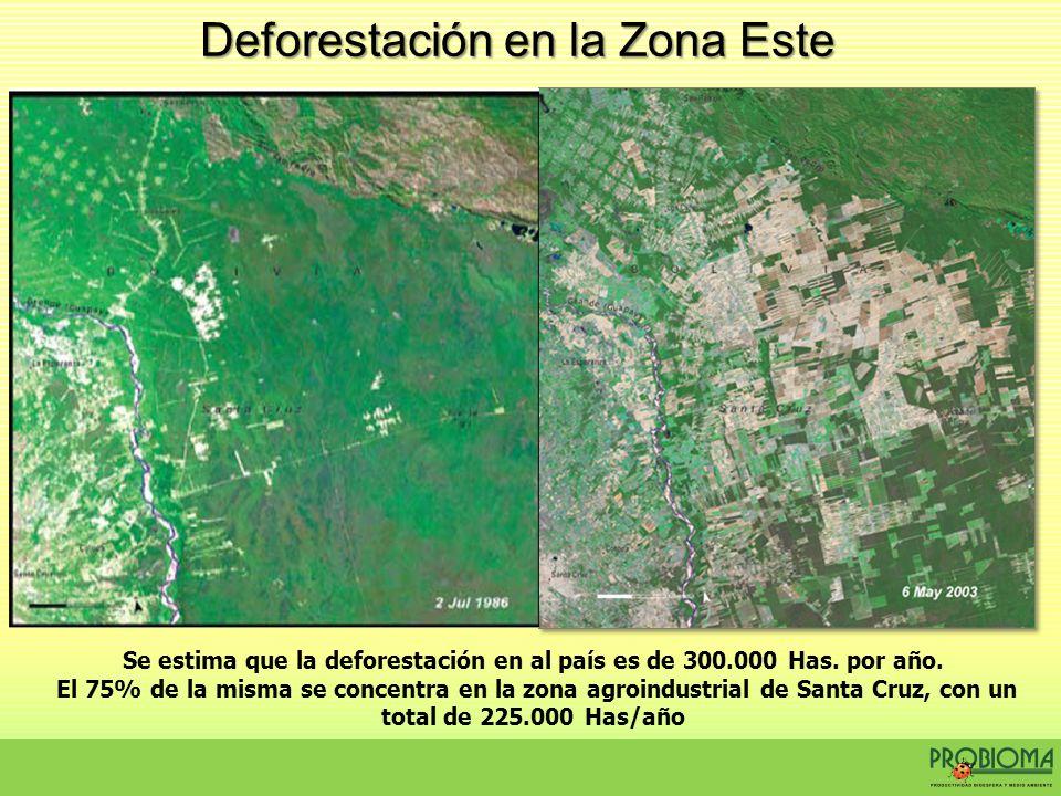 Se estima que la deforestación en al país es de 300.000 Has. por año.