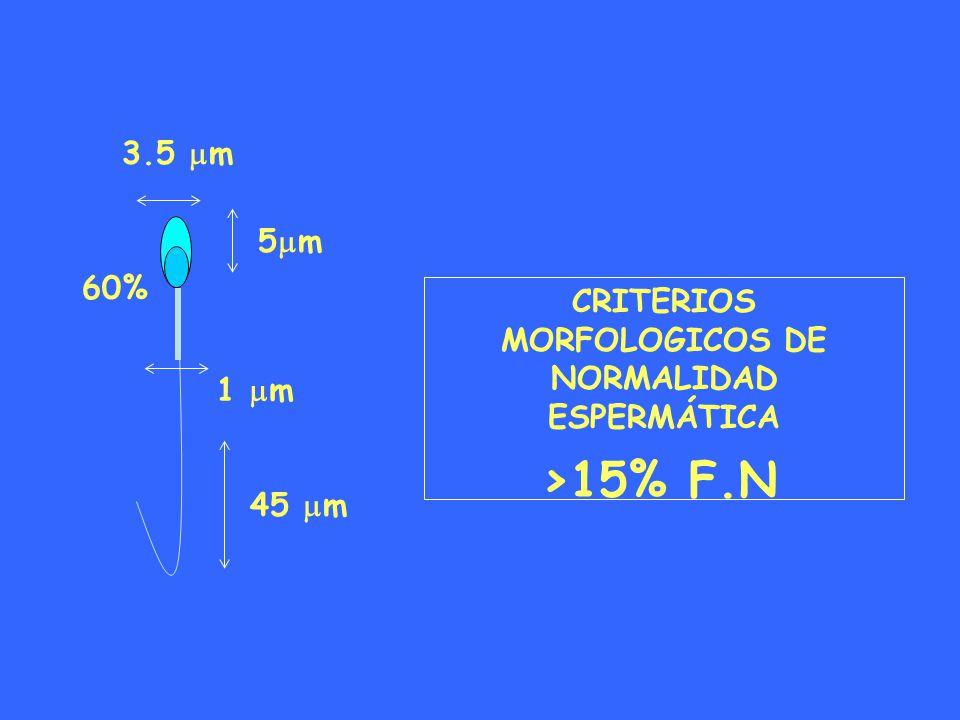 CRITERIOS MORFOLOGICOS DE NORMALIDAD ESPERMÁTICA