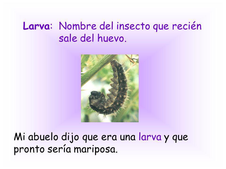 Larva: Nombre del insecto que recién sale del huevo.