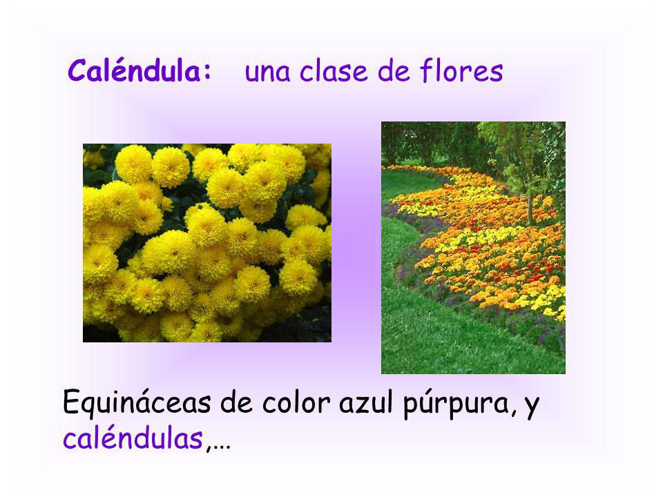 Caléndula: una clase de flores Equináceas de color azul púrpura, y caléndulas,…