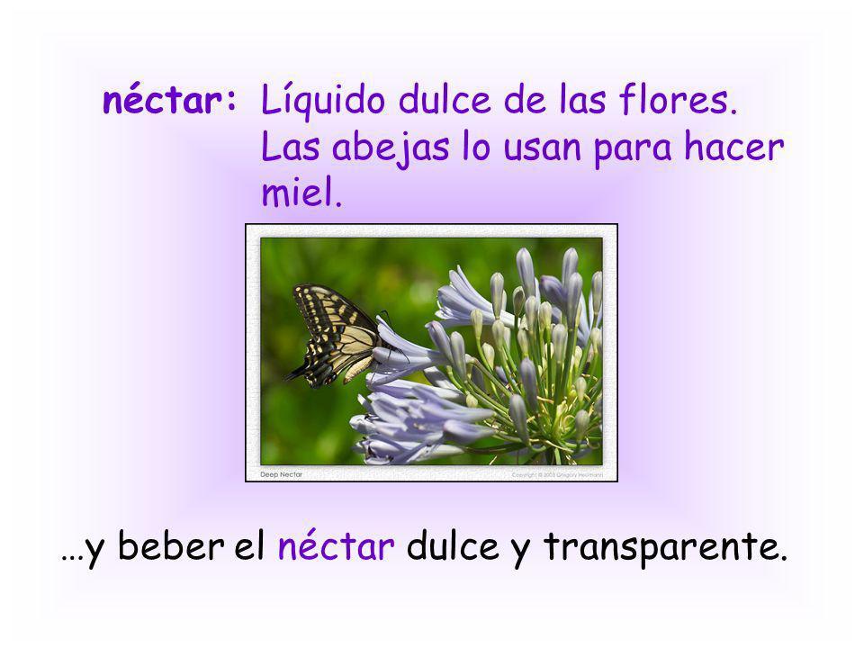 néctar: Líquido dulce de las flores. Las abejas lo usan para hacer miel.