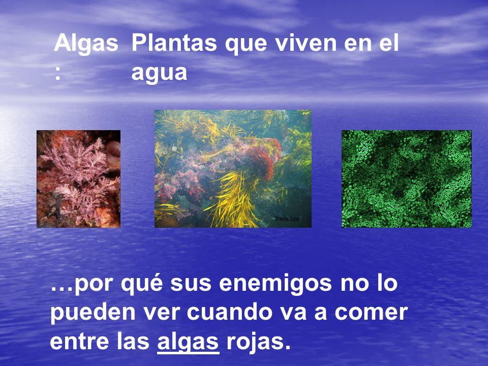 Algas: Plantas que viven en el agua.