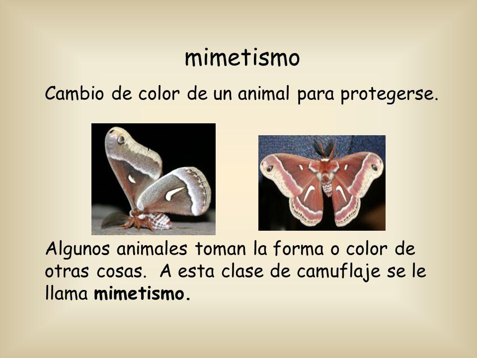 mimetismo Cambio de color de un animal para protegerse.