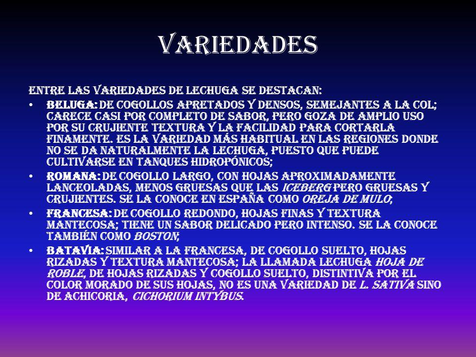 VARIEDADES Entre las variedades de lechuga se destacan: