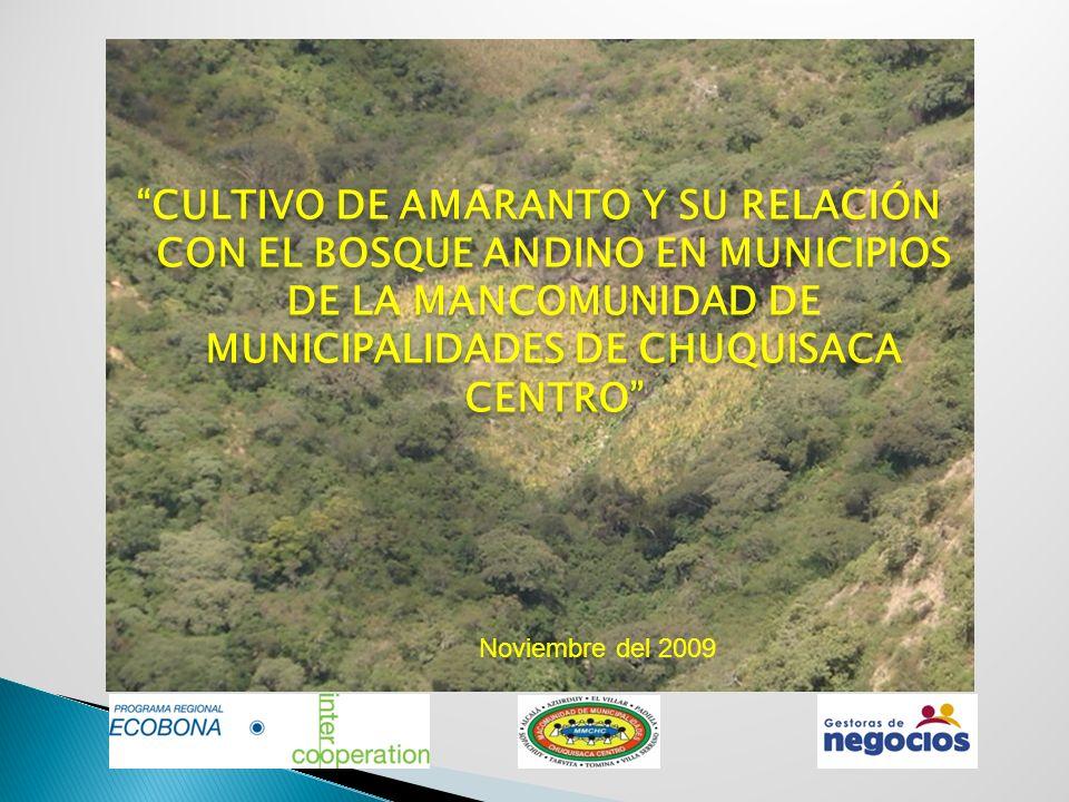 CULTIVO DE AMARANTO Y SU RELACIÓN CON EL BOSQUE ANDINO EN MUNICIPIOS DE LA MANCOMUNIDAD DE MUNICIPALIDADES DE CHUQUISACA CENTRO