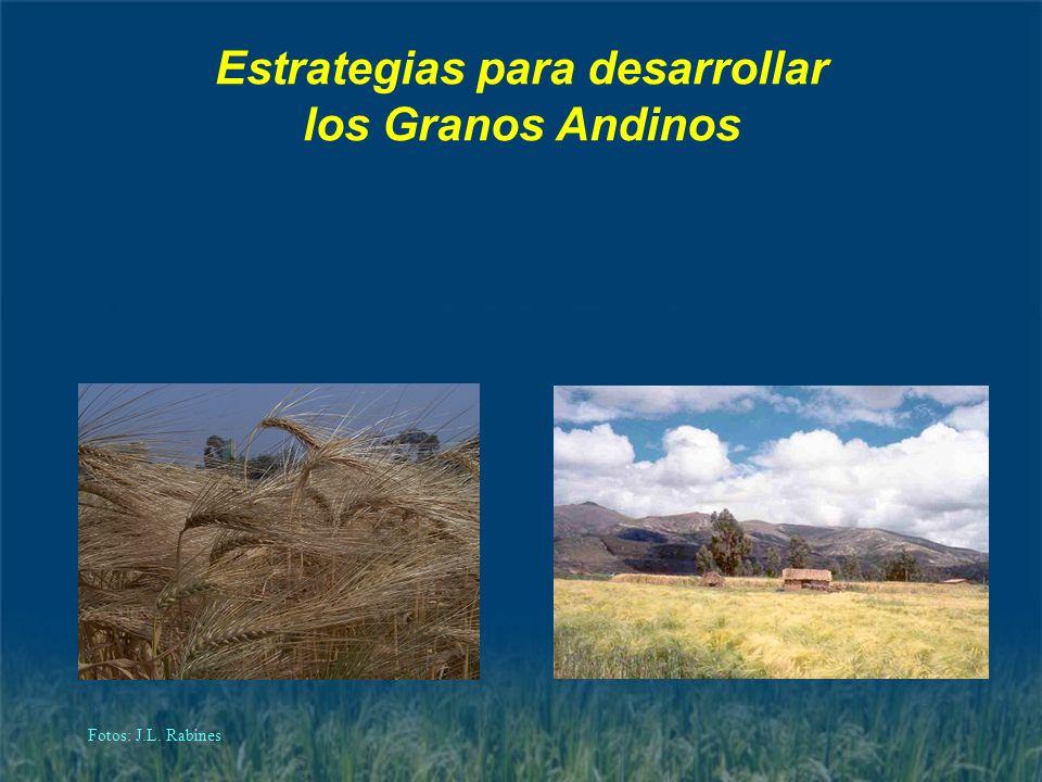 Estrategias para desarrollar los Granos Andinos