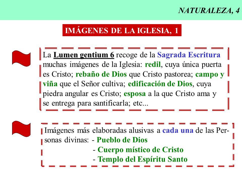 NATURALEZA, 4 IMÁGENES DE LA IGLESIA, 1. La Lumen gentium 6 recoge de la Sagrada Escritura. muchas imágenes de la Iglesia: redil, cuya única puerta.