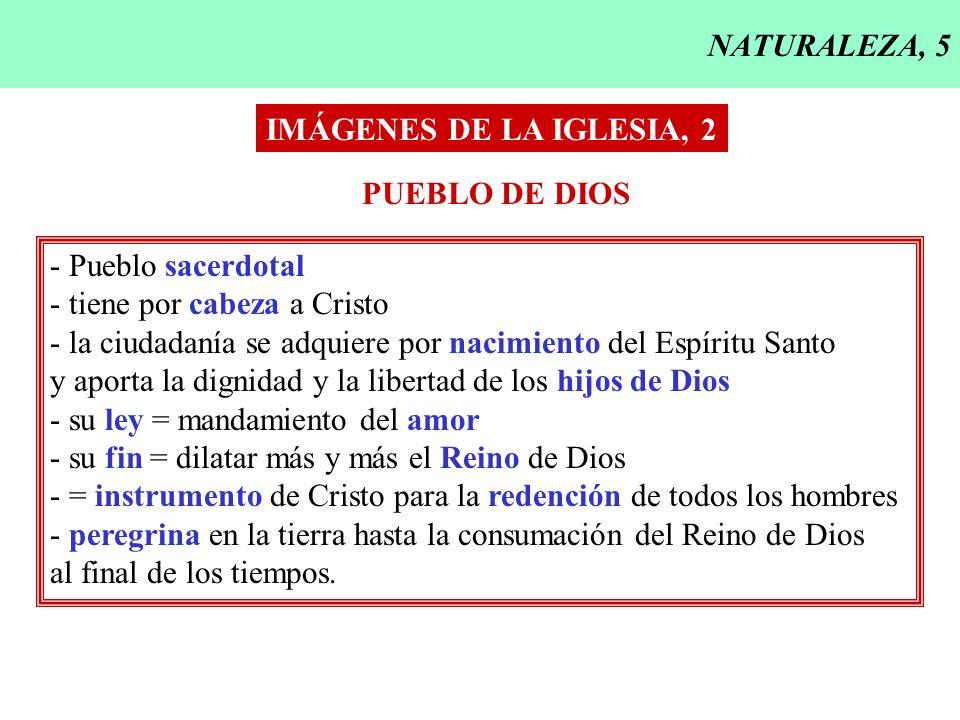 NATURALEZA, 5 IMÁGENES DE LA IGLESIA, 2. PUEBLO DE DIOS. - Pueblo sacerdotal. - tiene por cabeza a Cristo.