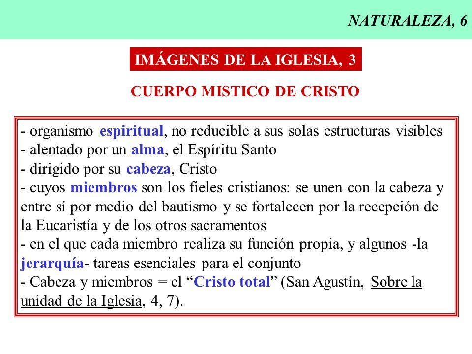 NATURALEZA, 6 IMÁGENES DE LA IGLESIA, 3. CUERPO MISTICO DE CRISTO. - organismo espiritual, no reducible a sus solas estructuras visibles.