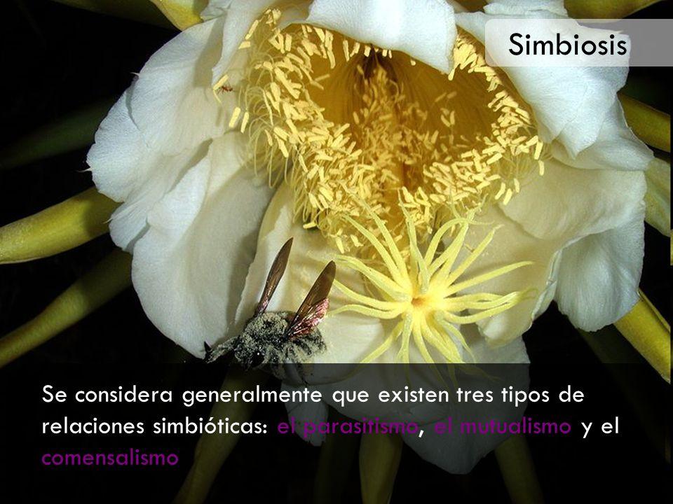 Simbiosis Se considera generalmente que existen tres tipos de relaciones simbióticas: el parasitismo, el mutualismo y el comensalismo.