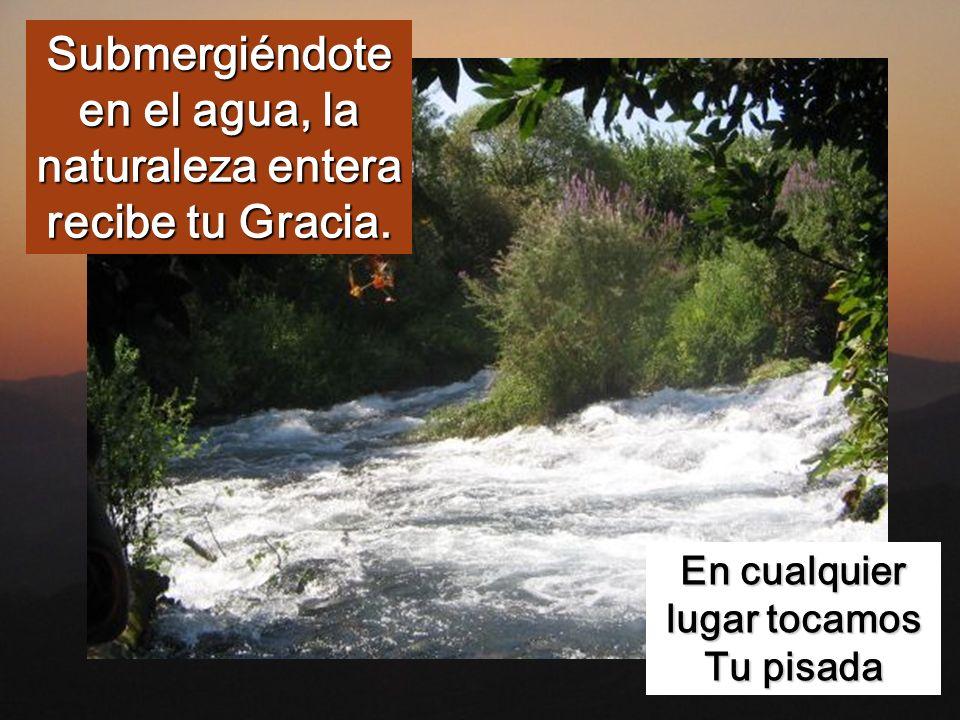 Submergiéndote en el agua, la naturaleza entera recibe tu Gracia.