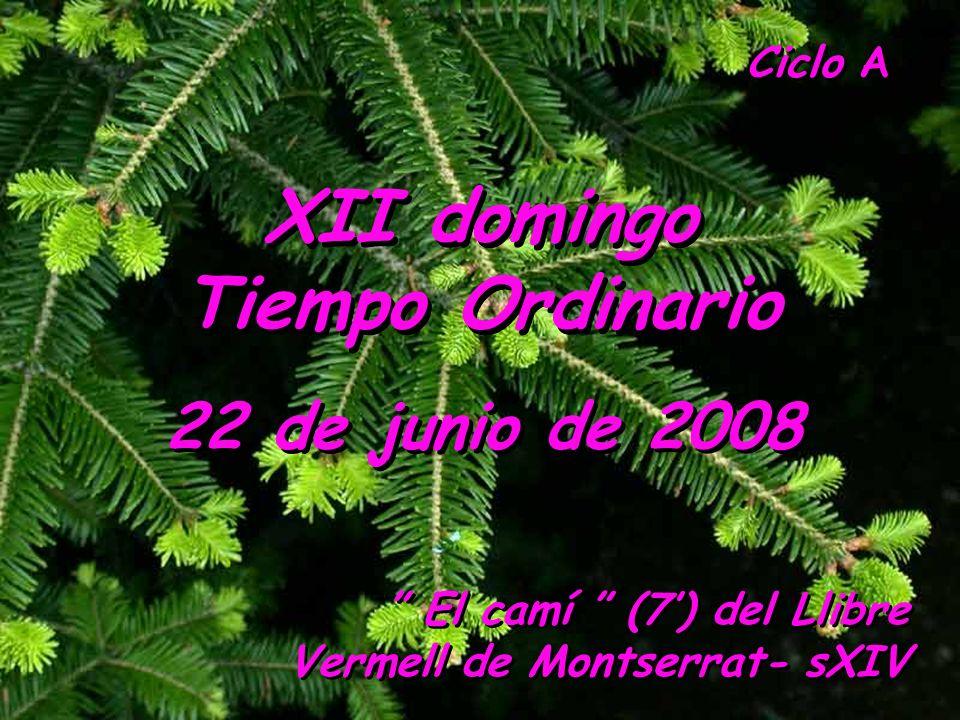XII domingo Tiempo Ordinario