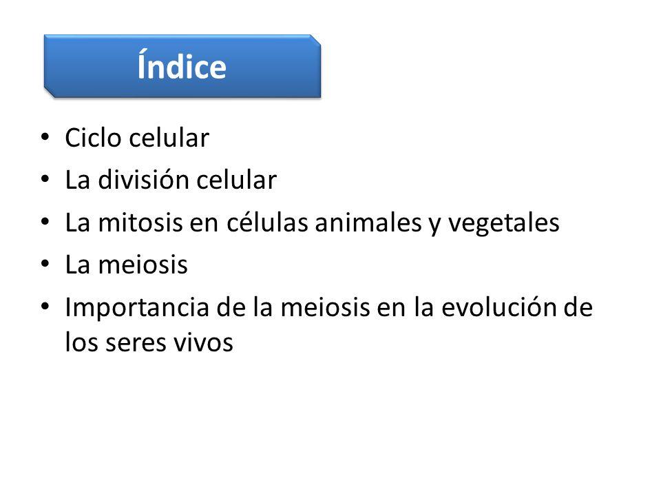 Índice Ciclo celular La división celular