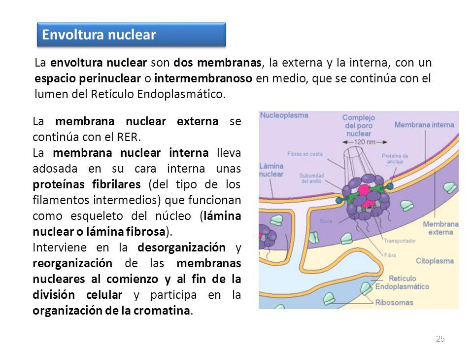 Envoltura nuclear
