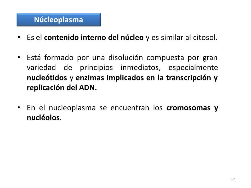 Núcleoplasma Es el contenido interno del núcleo y es similar al citosol.