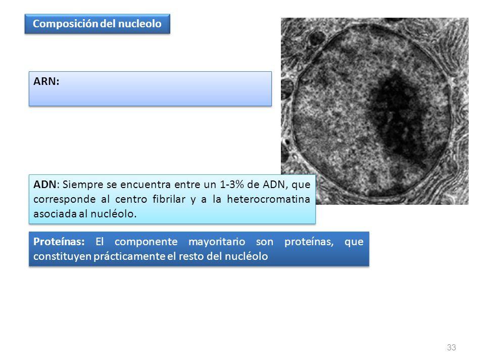 Composición del nucleolo