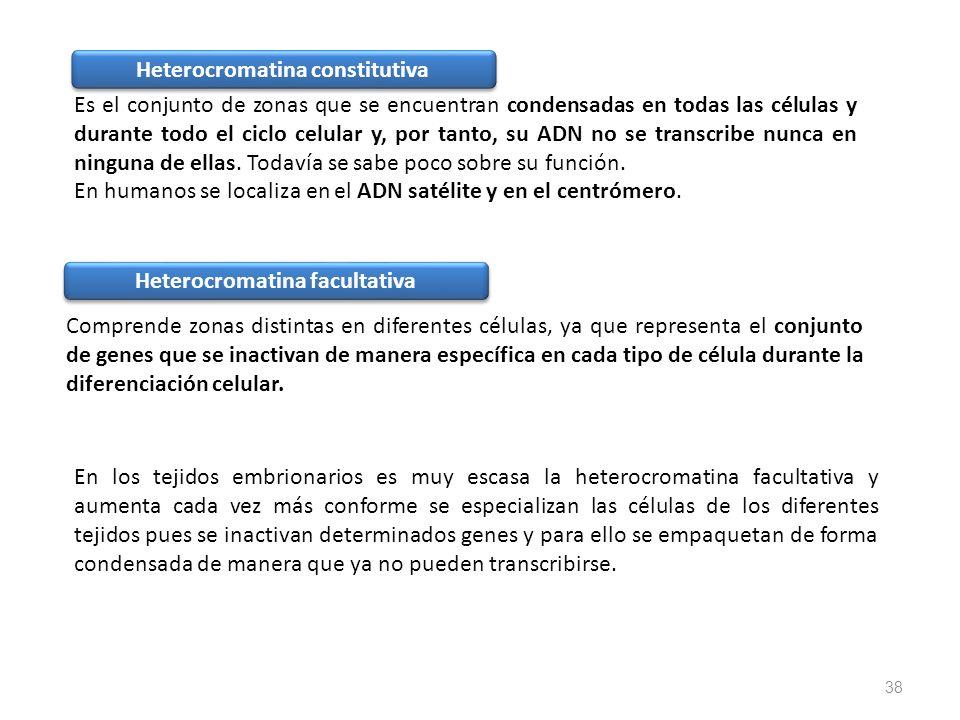 Heterocromatina constitutiva Heterocromatina facultativa