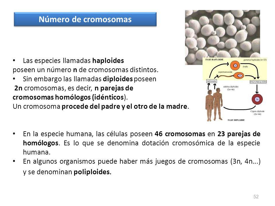 Número de cromosomas Las especies llamadas haploides