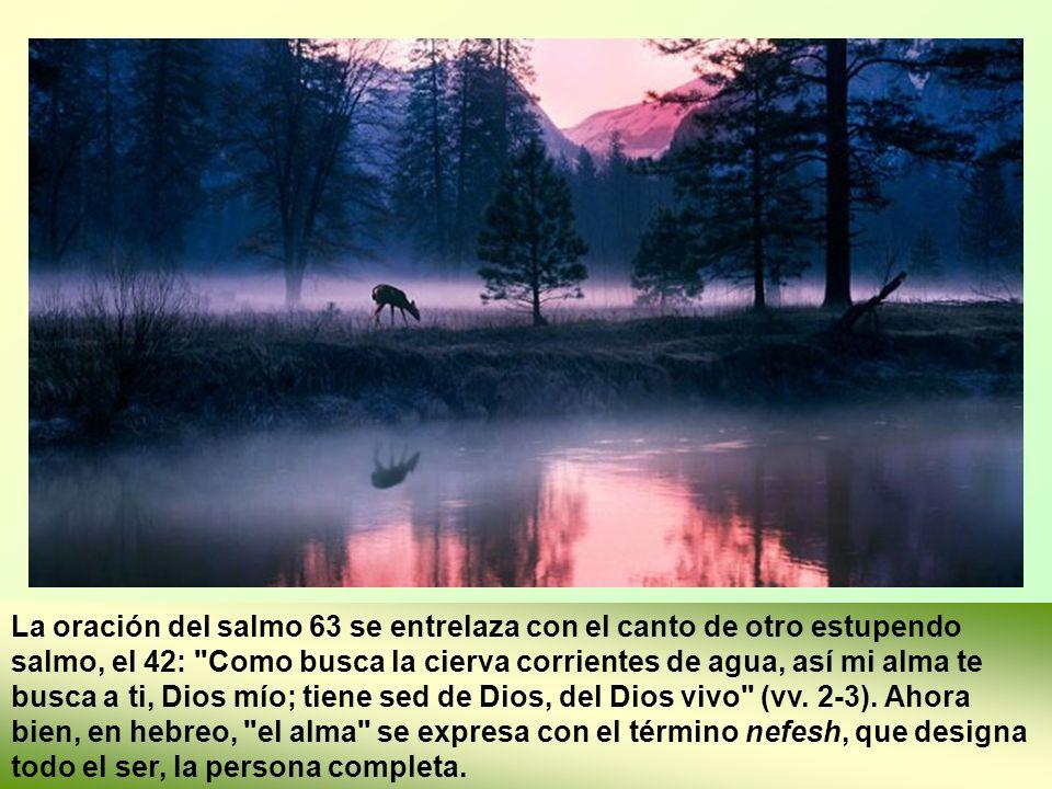 La oración del salmo 63 se entrelaza con el canto de otro estupendo salmo, el 42: Como busca la cierva corrientes de agua, así mi alma te busca a ti, Dios mío; tiene sed de Dios, del Dios vivo (vv.