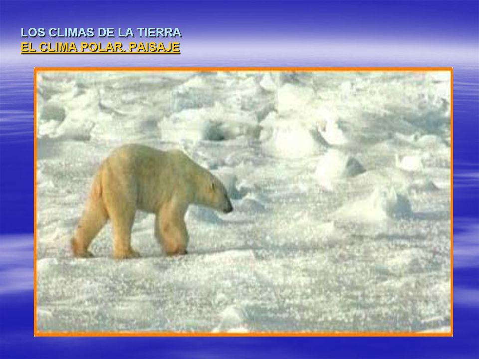 LOS CLIMAS DE LA TIERRA EL CLIMA POLAR. PAISAJE