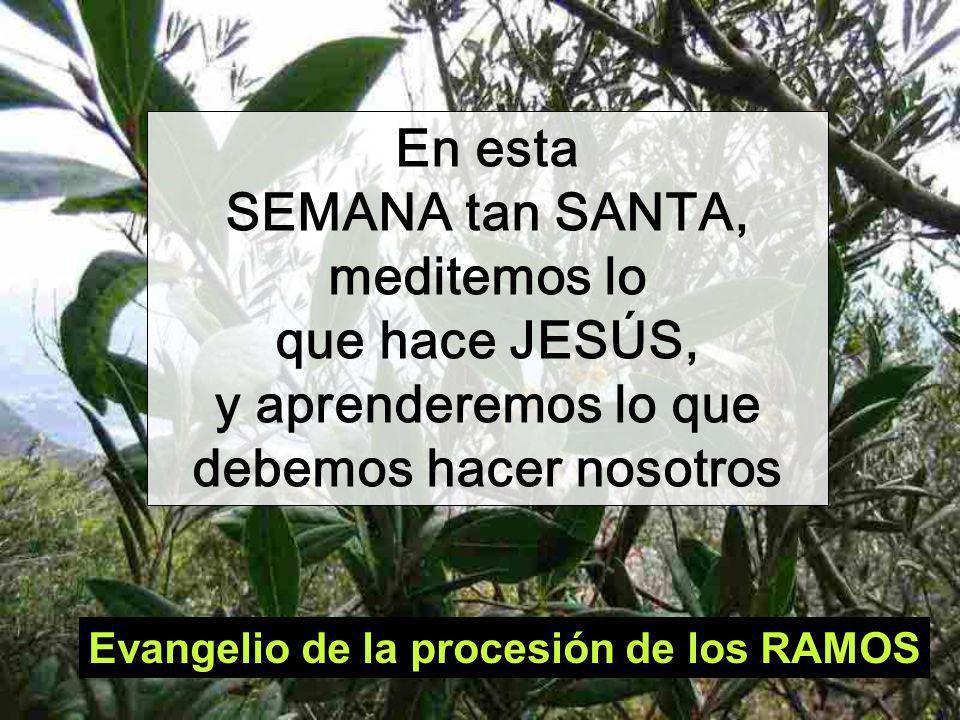 Evangelio de la procesión de los RAMOS